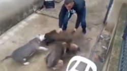Sueltan a un jabato en un patio para que los perros lo destrocen: la última vídeo-denuncia de