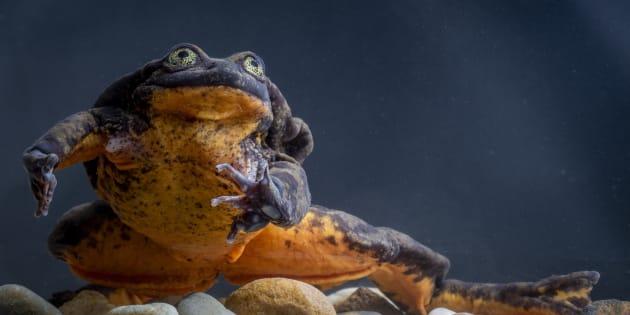 ひとりぼっちで暮らしてきた水棲カエルのロミオ