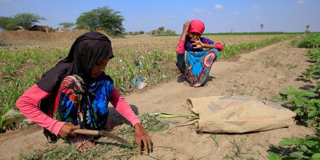 """Le Yémen face à """"la plus grande famine"""" de ces dernières décennies."""