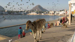 An Open Letter To Gau Maa — And Two Other