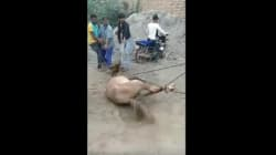A Bunch Of People Got Together In Haryana To Torture And Murder A Stray Horse While Police