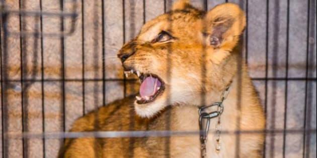 L'animal a été secouru à temps puis confié à l'association 30 millions d'amis.
