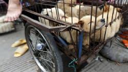 Taiwan è il primo paese asiatico a vietare la macellazione di cani e