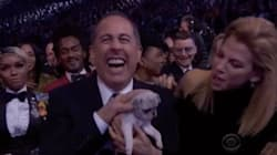 Ruff Night! Grammys Hand Out 'Consolation Puppies' To