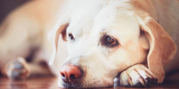 Gli animali domestici possono soffrire per un lutto. Ecco cosa c
