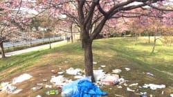 美しい桜の下にゴミ散乱…