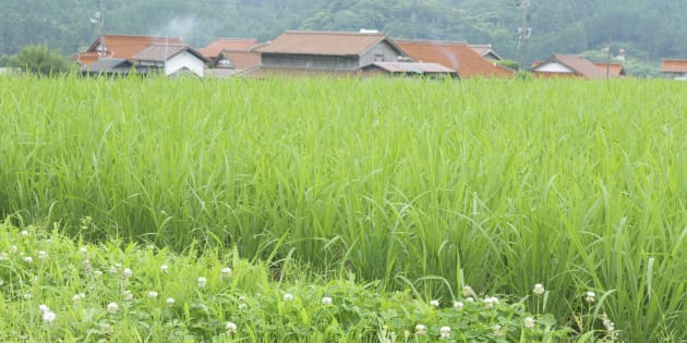 Japan, Yamaguchi Prefecture, Mine, View of rice field and private house (Photo by: JTB Photo/UIG via Getty Images)