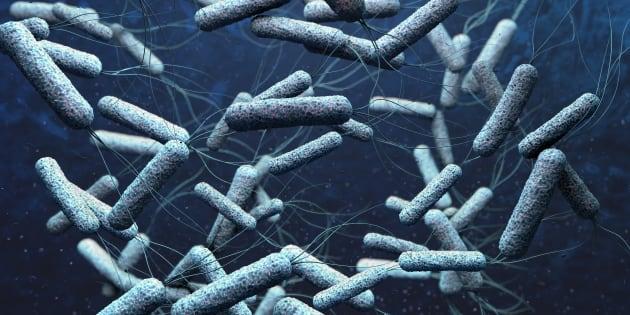 Des bactéries de choléra, reproduites en 3D.