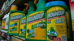 Du glyphosate retrouvé dans les urines de 30 personnalités d'Emily Loizeau à Charline