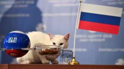 Il gatto Achille non ha dubbi su chi vincerà all'esordio mondiale tra Russia e Arabia