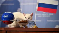 Achille le chat prévoit une victoire de la Russie pour le match d'ouverture du