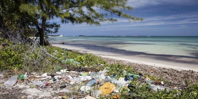 Playa del Caribe con basura.