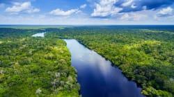 Fermato il decreto sulle miniere, l'Amazzonia (per ora) è salva...e continua a regalare