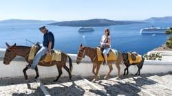 Il pentimento dell'isola di Santorini: stop allo sfruttamento degli asini per il trasporto di