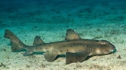 Deux hommes volent un requin d'un aquarium en le cachant dans une