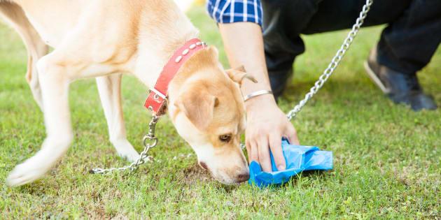 Pourquoi les chiens mangent leur caca ? Cette question peut paraître bizarre et anodine, mais c'est un vrai mystère pour les scientifiques, qui essayent d'y voir plus clair.