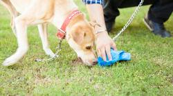 Pourquoi les chiens mangent leur caca
