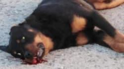 Un policía local de Calafell (Tarragona) mata a un perro a