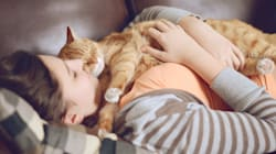 Questo annuncio di lavoro è quello che tutti gli amanti dei gatti