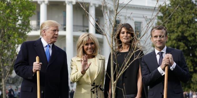 L'arbre planté par Macron et Trump à la Maison Blanche a bien été retiré, mais pour la bonne cause