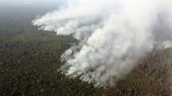 Desmatamento da Amazônia atinge recorde em uma