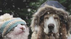Cómo cuidar a tu mascota durante el