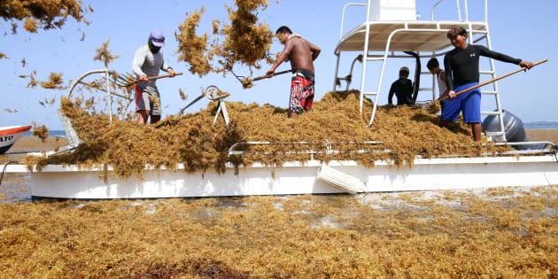 Pescadores se han sumado a la limpieza del sargazo que inundo la playa de Puerto Morelos. FOTO: CUARTOSCURO.COM