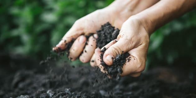 Manos de un hombre cogiendo tierra del suelo.