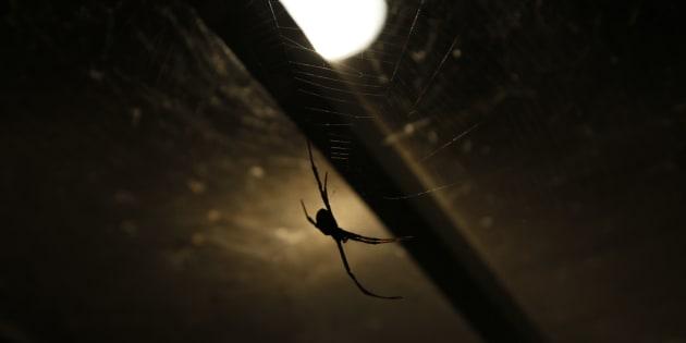 Il demeure que souvent, quand on a peur, on a peur, de sorte qu'on refuse de concevoir, et encore moins de reconnaître, que l'araignée dans le sous-sol soit petite. On y croit dur comme fer. Jusqu'à ce qu'on accepte de jeter un coup d'œil cru à la réalité.
