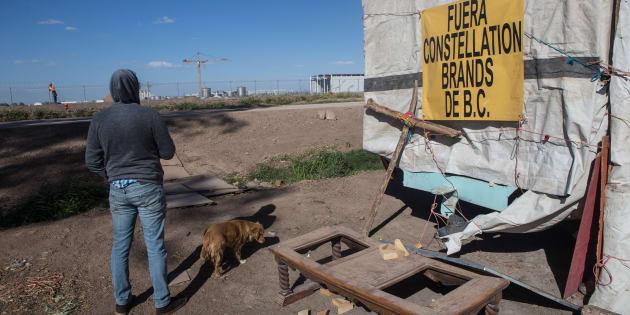 Ambientalistas y ejidatarios de han denunciado ante diversos foros nacionales e internaciones que la €œconstrucción de la planta cervecera de Constellation Brands traerá escasez de agua en la región, en Mexicali, Baja California, el 9 de marzo de 2018.