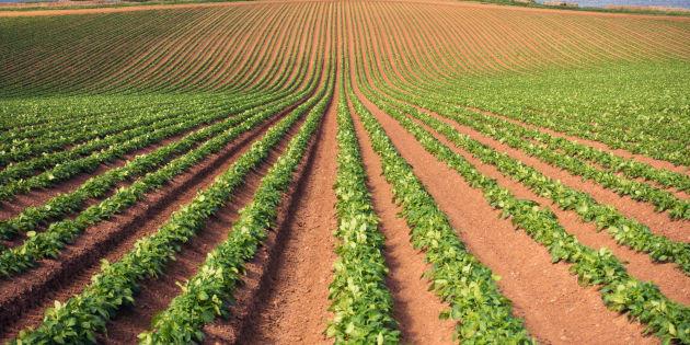 Avec le réchauffement climatique, les récoltes de légumes pourraient être réduites de près d'un tiers