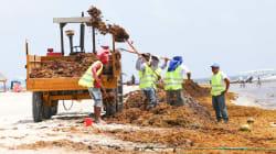 Construirán 'muro caribeño' para contener la llegada del sargazo a