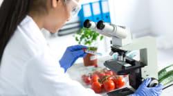 Le biotecnologie vegetali vanno messe alla prova, non al