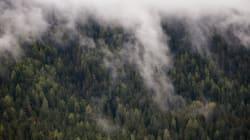 産廃処分場の許可取り消しとミゾゴイの森の保全を要請