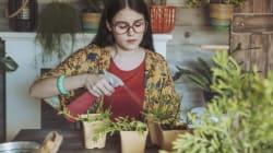 5 estratégias que parecem estranhas, mas que vão ajudar a sua planta a