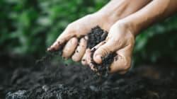 Alerte sur la dégradation des sols et son impact sur les