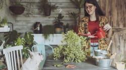 As suas plantas podem ser verdadeiras armadilhas para os catíoros e