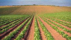 Avec le réchauffement climatique, les récoltes de légumes pourraient être réduites de près d'un