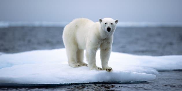 Il fait actuellement plus chaud au Groenland qu'à Paris, et ce n'est pas très rassurant.