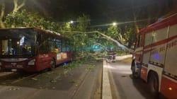 Albero di 12 metri cade su un autobus a Roma: ferito