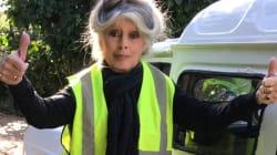 Brigitte Bardot met un gilet jaune (et elle n'est pas