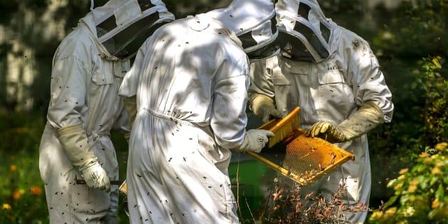Ces apiculteurs veulent comprendre comment du glyphosate a atterri dans leur miel