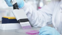 BLOGUE L'ingénierie cellulaire à l'œuvre: les anticorps