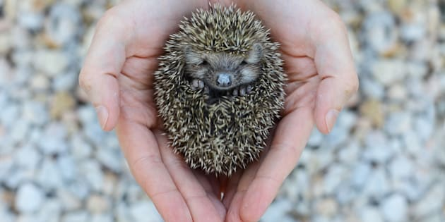 Who knew that hedgehogs could be that cute!