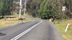 Cyclists's One Word Response To Emu Attack Is