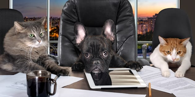 """""""Like training a dog, with leadership it's not one-size-fits-all. Some dogs are toy-motivated, others are food-motivated. Identify your employee's motivation and work with it, not against it."""""""