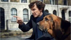 Cette coïncidence généalogique impliquant Benedict Cumberbatch ne pouvait mieux
