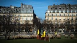Des brebis aux Tuileries pour manifester contre les attaques de