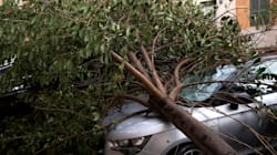 A Roma piovono alberi, ma la responsabile del Verde pubblico è in
