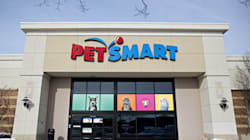Grooming At PetSmart Linked To Dozens Of U.S. Dog Deaths, Illnesses: